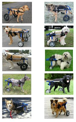 Walkin' Wheels Dog Cart 装着の愛犬達